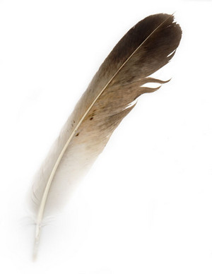 bird feather 13486506267