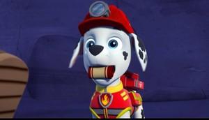 Marshall, the Dalmatian
