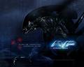 Alien Vs. Predator - horror-movies wallpaper