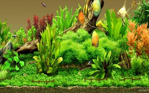 Aquarium پیپر وال