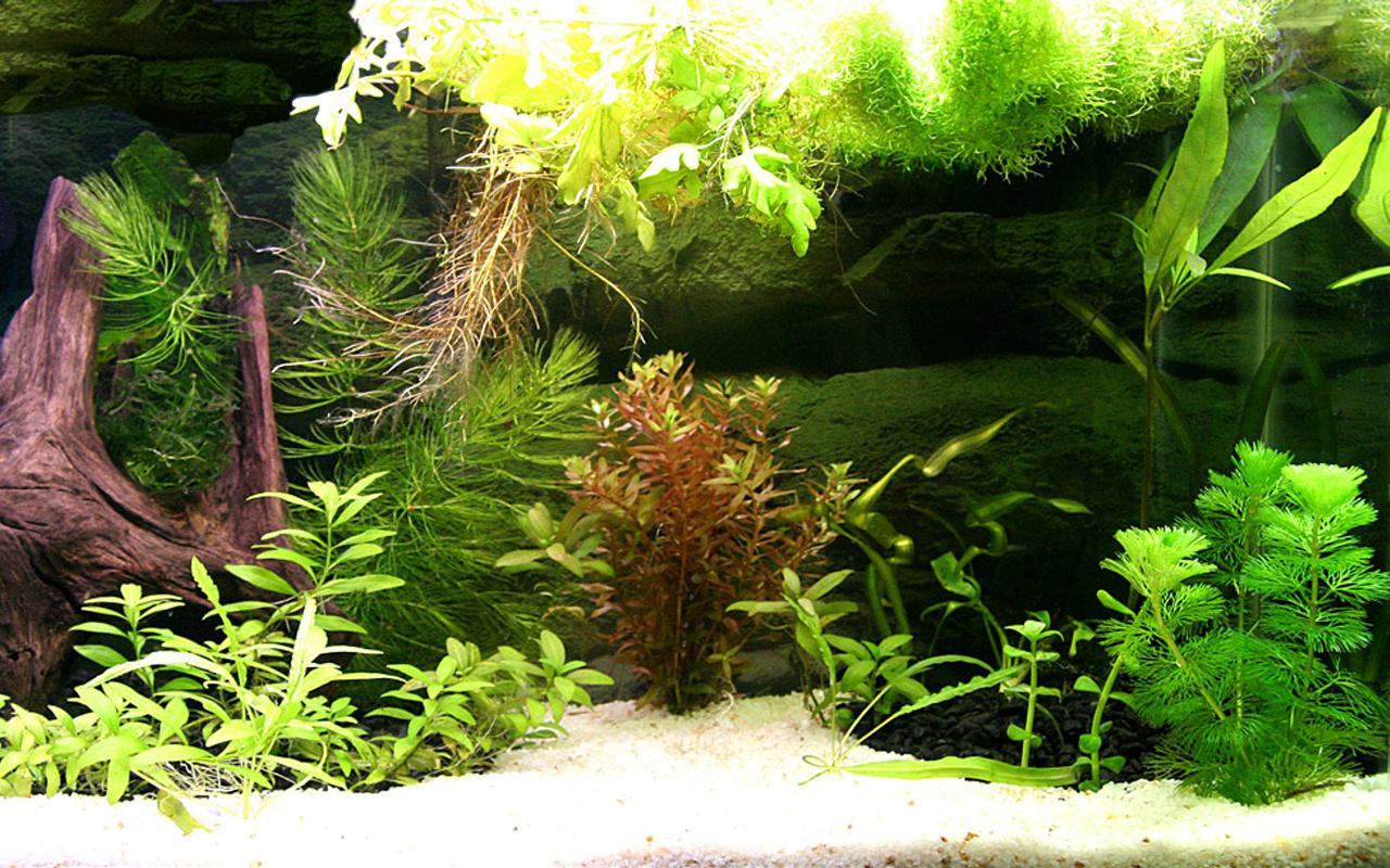 Aquarium fondo de pantalla