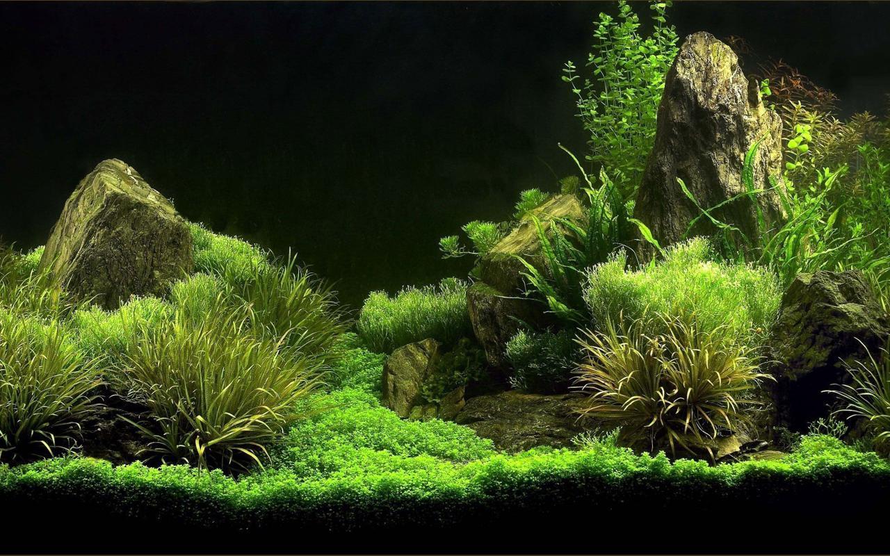 Aquarium kertas dinding