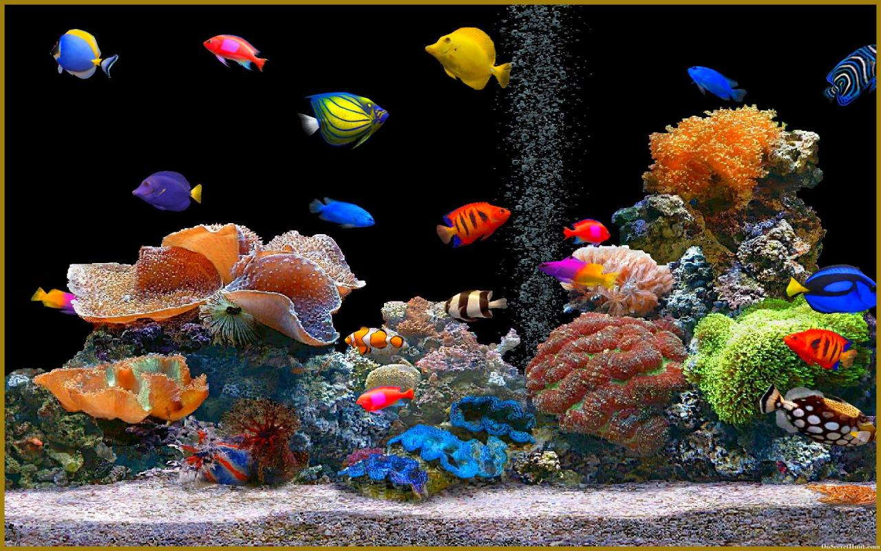 aquarium wallpaper hd-#7