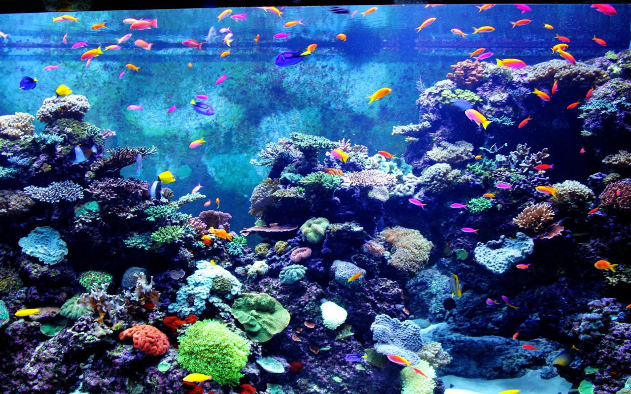 aquarium hd wallpaper - photo #5