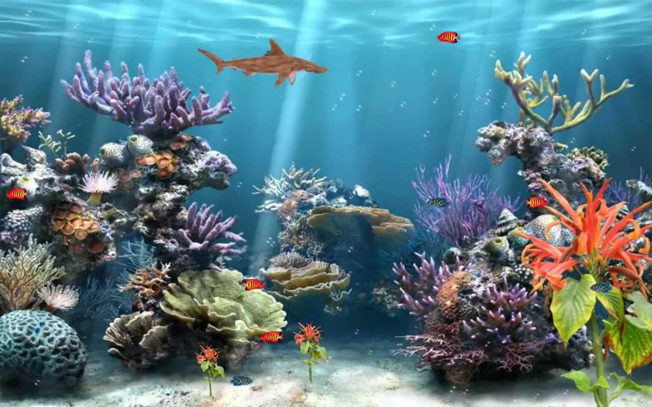 achtergrond aquarium