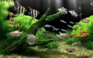 Aquarium Wallpaper
