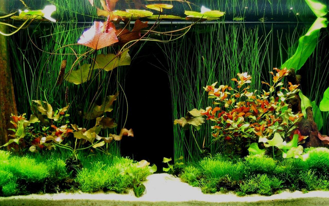 Aquarium hình nền