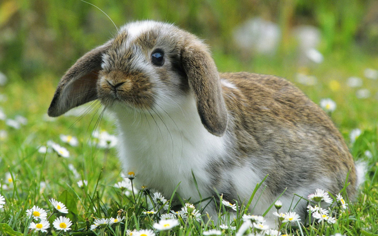Rabbits Images Beautiful Bunny Hd Wallpaper And Background Photos