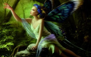butterfly, kipepeo Fairy