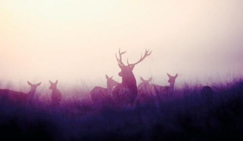ace2000 fondo de pantalla titled Deer