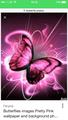 IMG 0099.PNG - butterflies wallpaper