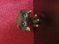 IMG 2487.JPG - littlest-pet-shop photo