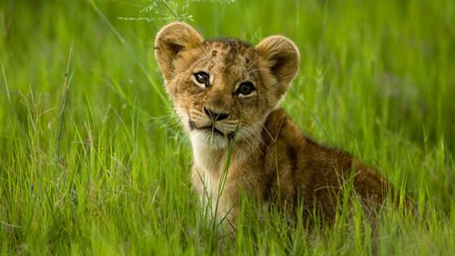 National Geographic Hintergrund entitled In The Wild