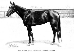Lou Dillon