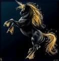 Magical - unicorns photo