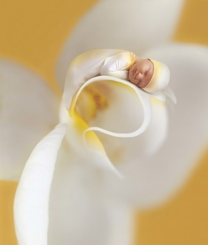 Miracle door Anne Geddes