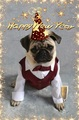 Pug Happy New Year - pugs photo