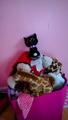 Scourge beanie boo - warrior-cats photo