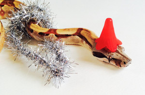 Snakes Wearing Hats