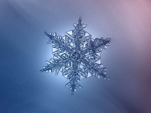ace2000 fondo de pantalla entitled Snowflake