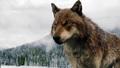 TWILIGHT5 TIPPETT VFX 13 - wolves photo
