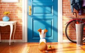 The Secret Life Of Pets fond d'écran