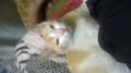 WP 20170114 20 58 30 Pro - cats photo