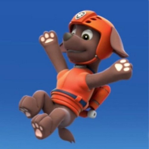 Paw Patrol Wallpaper Titled Zuma The Labrador