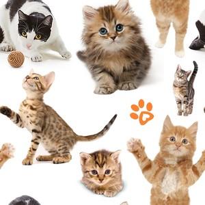 cat pattern 由 geocen