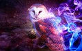 owl - guardians-of-gahoole photo