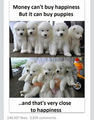 puppies!! ^^ - random photo