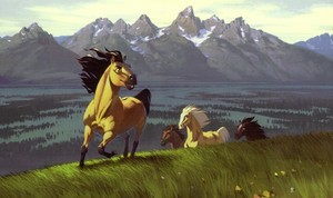 >> spirit stallion of the cimarron <<