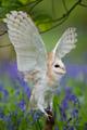 grange Owl