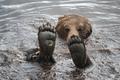 Bear feet! - random photo