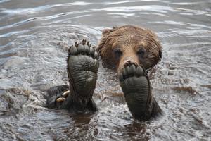 Bear feet!