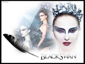 Black zwaan-, zwaan