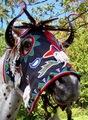 Cayuse Horse Mask