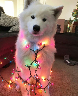 Рождество Lights