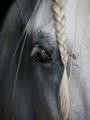 Close-Up - horses photo