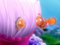 Coral and Marlin - childhood-animated-movie-characters photo