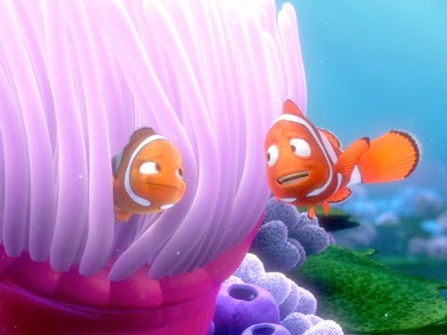 Childhood Animated Movie Characters 壁纸 called Coral and 马林鱼, 马林