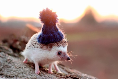 Cute Hedgehog💋 ❤