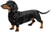 Dachshund - dogs icon