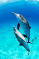 Dolphins - dolphins photo