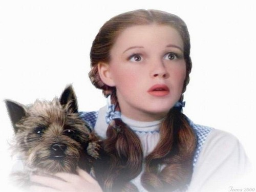Le Magicien d'Oz fond d'écran entitled Dorothy and Toto 💕