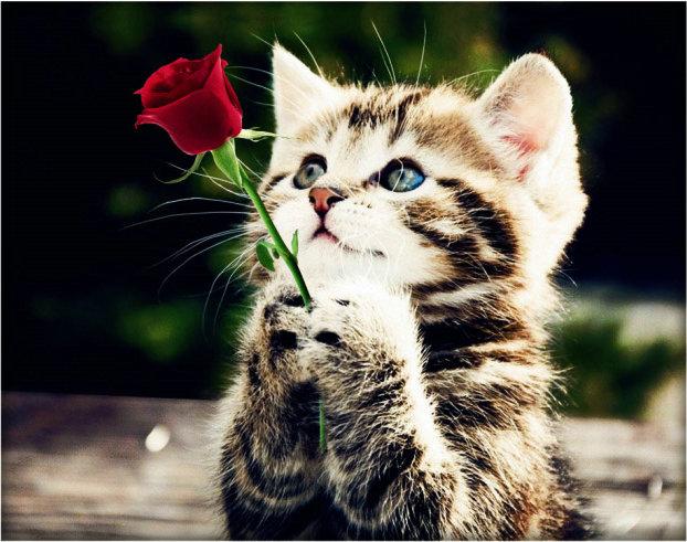 Happy Valentines Day Dear Sharon ♥