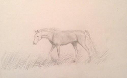 ace2000 fondo de pantalla entitled Horse