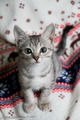 Innocent Cat - cats photo