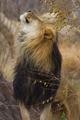 Lion - lions photo
