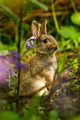 Little Rabbit - bunny-rabbits photo